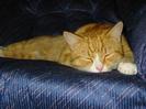 Toby sleeping